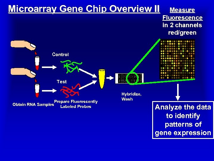 Microarray Gene Chip Overview II Measure Fluorescence in 2 channels red/green Control Test Prepare