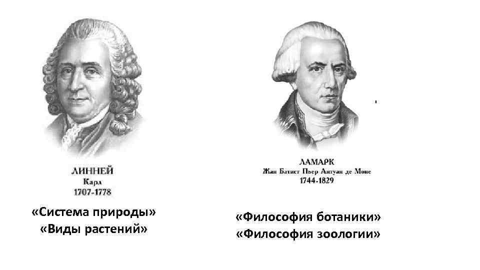 «Система природы» «Виды растений» «Философия ботаники» «Философия зоологии»