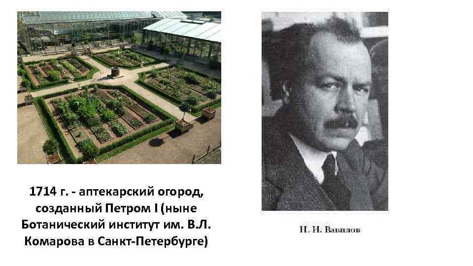 1714 г. - аптекарский огород, созданный Петром I (ныне Ботанический институт им. В. Л.