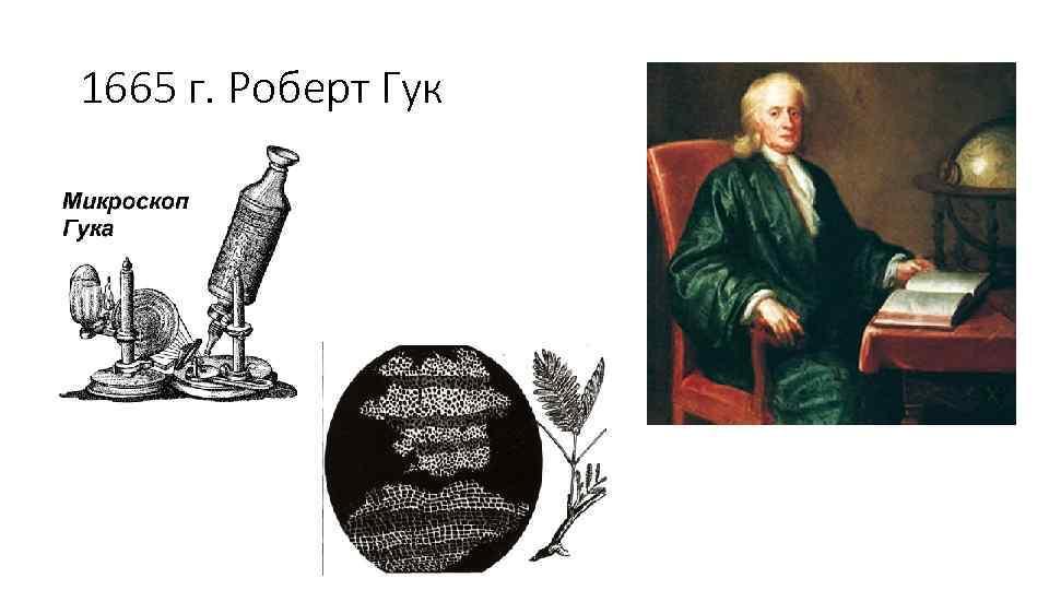 1665 г. Роберт Гук
