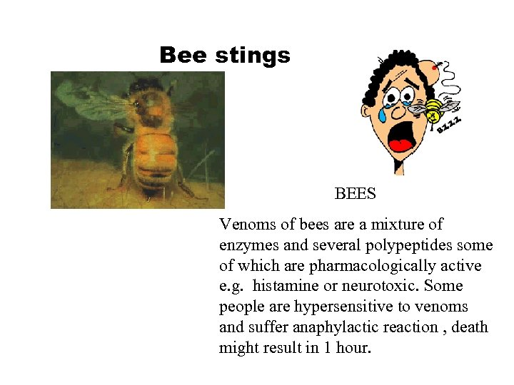 Bee stings BEES Venoms of bees are a mixture of enzymes and several polypeptides