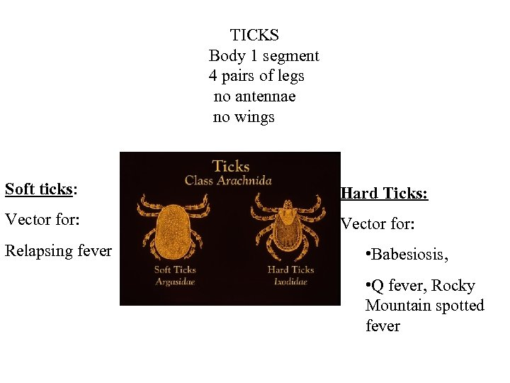 TICKS Body 1 segment 4 pairs of legs no antennae no wings Soft ticks: