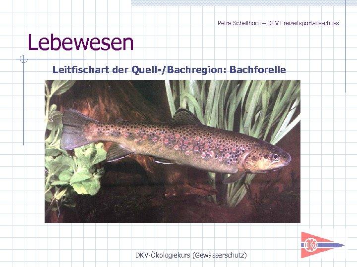 Petra Schellhorn – DKV Freizeitsportausschuss Lebewesen Leitfischart der Quell-/Bachregion: Bachforelle DKV-Ökologiekurs (Gewässerschutz)