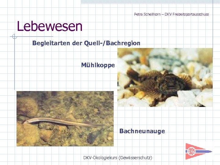 Petra Schellhorn – DKV Freizeitsportausschuss Lebewesen Begleitarten der Quell-/Bachregion Mühlkoppe Bachneunauge DKV-Ökologiekurs (Gewässerschutz)