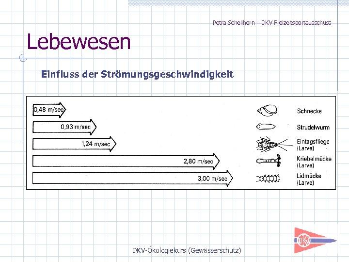 Petra Schellhorn – DKV Freizeitsportausschuss Lebewesen Einfluss der Strömungsgeschwindigkeit DKV-Ökologiekurs (Gewässerschutz)