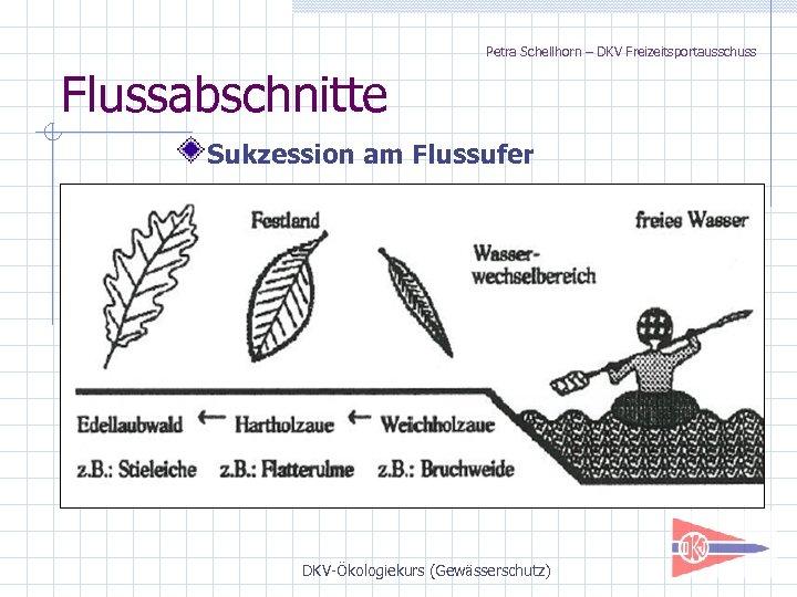 Petra Schellhorn – DKV Freizeitsportausschuss Flussabschnitte Sukzession am Flussufer DKV-Ökologiekurs (Gewässerschutz)