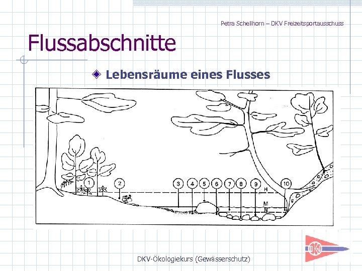 Petra Schellhorn – DKV Freizeitsportausschuss Flussabschnitte Lebensräume eines Flusses DKV-Ökologiekurs (Gewässerschutz)