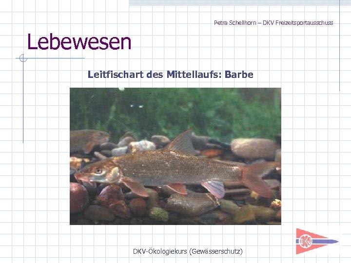 Petra Schellhorn – DKV Freizeitsportausschuss Lebewesen Leitfischart des Mittellaufs: Barbe DKV-Ökologiekurs (Gewässerschutz)