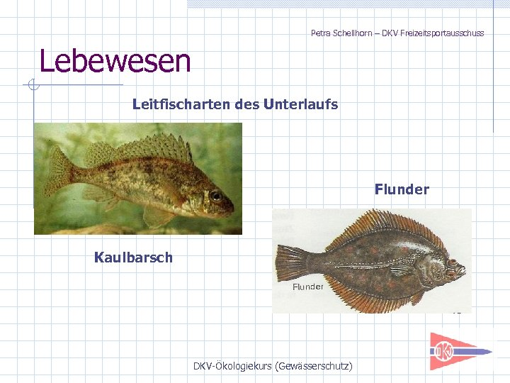 Petra Schellhorn – DKV Freizeitsportausschuss Lebewesen Leitfischarten des Unterlaufs Flunder Kaulbarsch DKV-Ökologiekurs (Gewässerschutz)