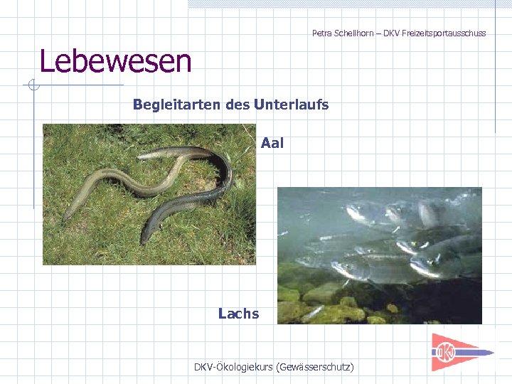 Petra Schellhorn – DKV Freizeitsportausschuss Lebewesen Begleitarten des Unterlaufs Aal Lachs DKV-Ökologiekurs (Gewässerschutz)