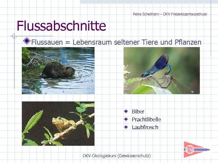 Petra Schellhorn – DKV Freizeitsportausschuss Flussabschnitte Flussauen = Lebensraum seltener Tiere und Pflanzen Biber