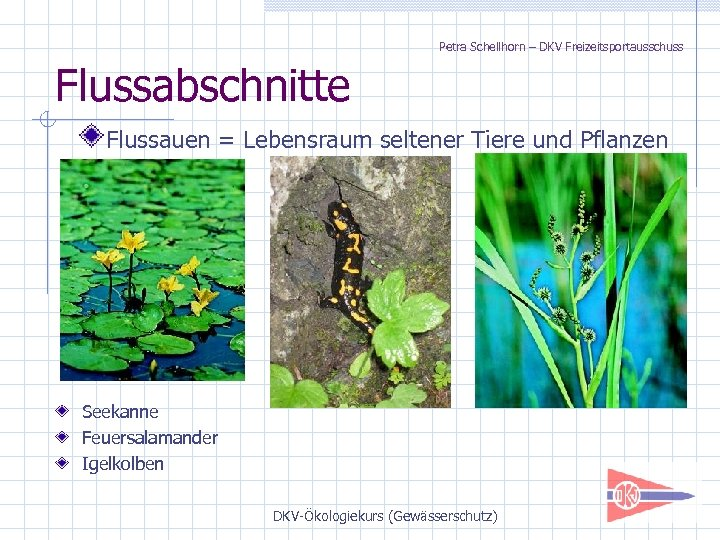Petra Schellhorn – DKV Freizeitsportausschuss Flussabschnitte Flussauen = Lebensraum seltener Tiere und Pflanzen Seekanne