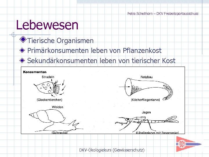 Petra Schellhorn – DKV Freizeitsportausschuss Lebewesen Tierische Organismen Primärkonsumenten leben von Pflanzenkost Sekundärkonsumenten leben