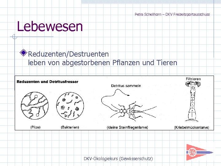 Petra Schellhorn – DKV Freizeitsportausschuss Lebewesen Reduzenten/Destruenten leben von abgestorbenen Pflanzen und Tieren DKV-Ökologiekurs