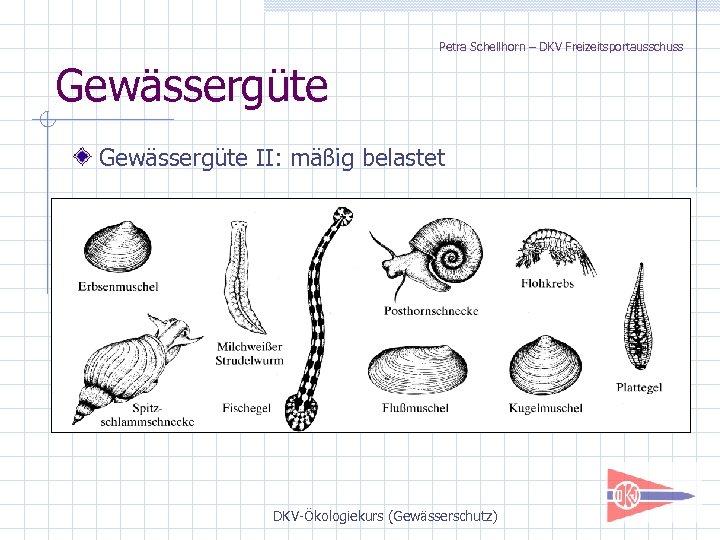 Petra Schellhorn – DKV Freizeitsportausschuss Gewässergüte II: mäßig belastet DKV-Ökologiekurs (Gewässerschutz)