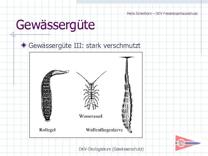 Petra Schellhorn – DKV Freizeitsportausschuss Gewässergüte III: stark verschmutzt DKV-Ökologiekurs (Gewässerschutz)