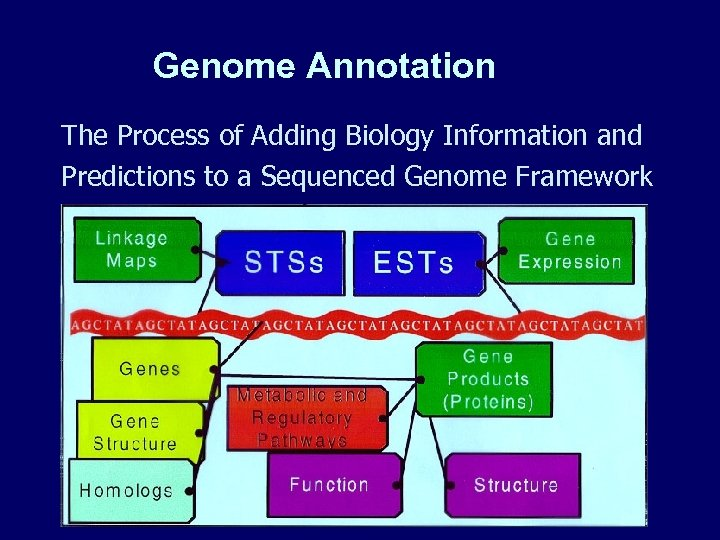 Genome Annotation The Process of Adding Biology Information and Predictions to a Sequenced Genome