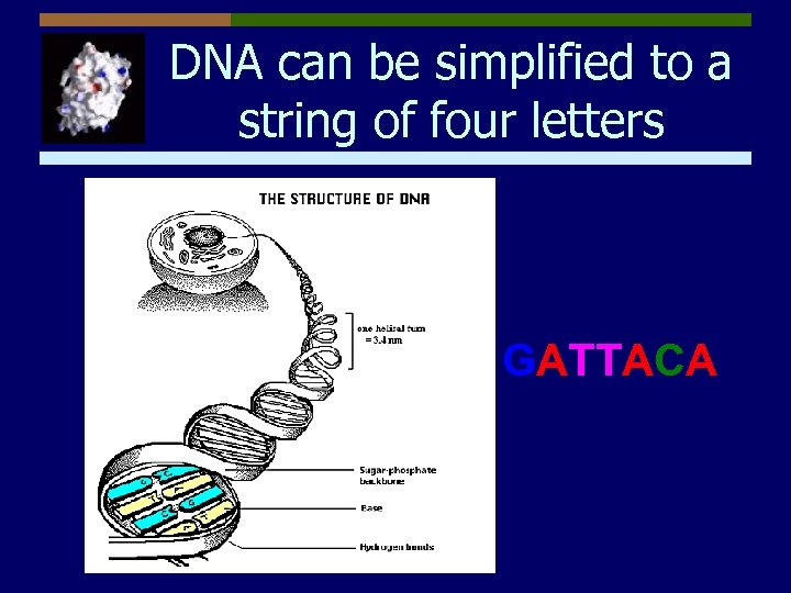 DNA can be simplified to a string of four letters GATTACA