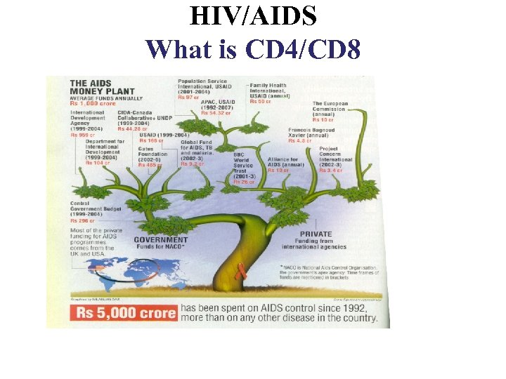 HIV/AIDS What is CD 4/CD 8