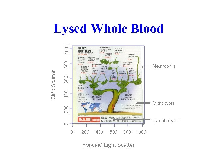 400 600 Neutrophils 200 Monocytes Lymphocytes 0 Side Scatter 800 1000 Lysed Whole Blood