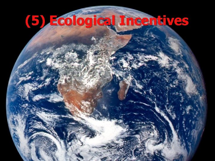 (5) Ecological Incentives