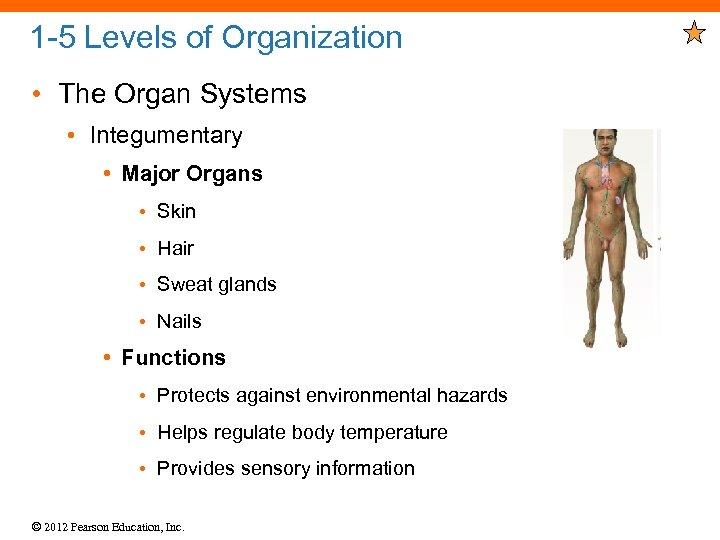 1 -5 Levels of Organization • The Organ Systems • Integumentary • Major Organs