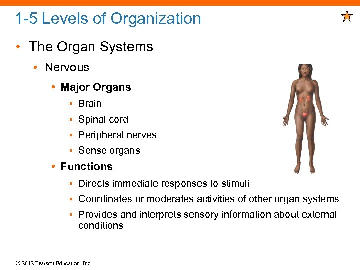 1 -5 Levels of Organization • The Organ Systems • Nervous • Major Organs