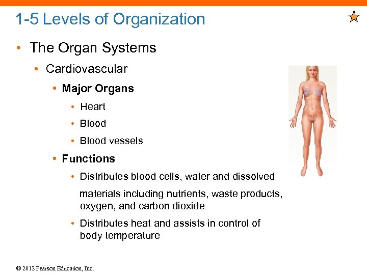 1 -5 Levels of Organization • The Organ Systems • Cardiovascular • Major Organs