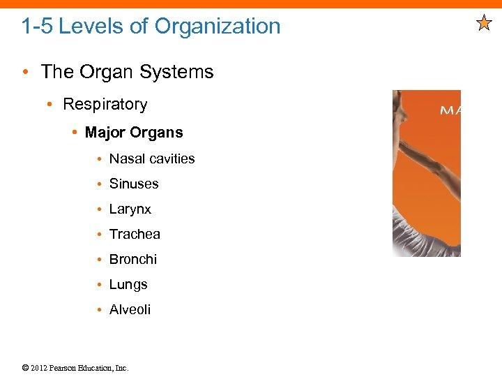 1 -5 Levels of Organization • The Organ Systems • Respiratory • Major Organs