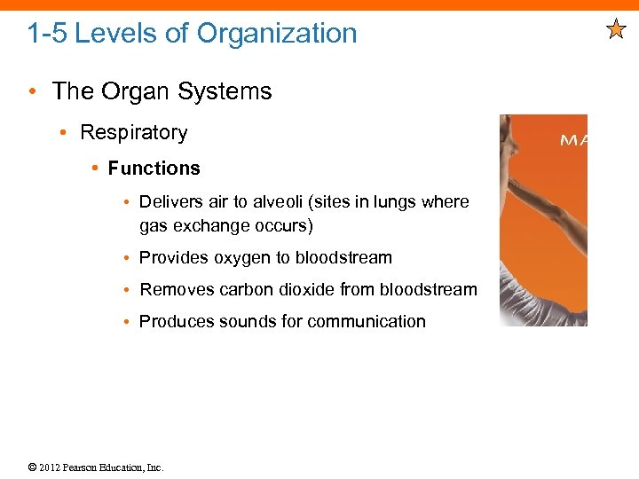 1 -5 Levels of Organization • The Organ Systems • Respiratory • Functions •