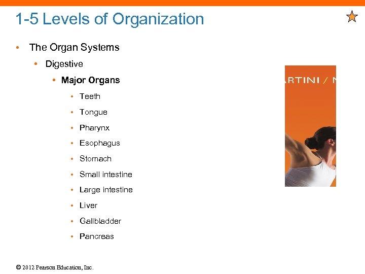 1 -5 Levels of Organization • The Organ Systems • Digestive • Major Organs