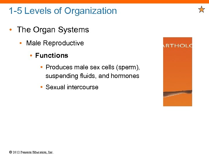 1 -5 Levels of Organization • The Organ Systems • Male Reproductive • Functions