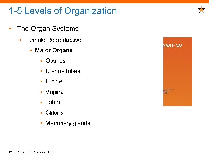 1 -5 Levels of Organization • The Organ Systems • Female Reproductive • Major