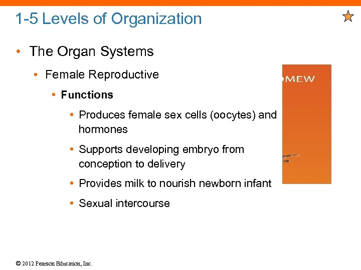 1 -5 Levels of Organization • The Organ Systems • Female Reproductive • Functions