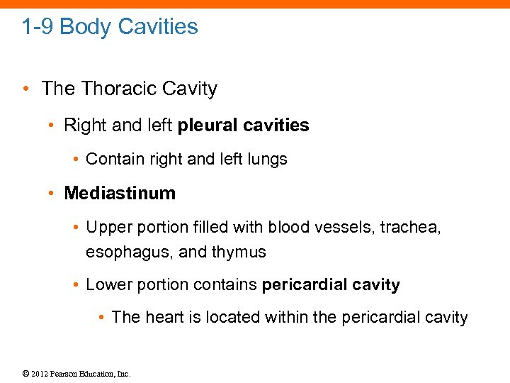 1 -9 Body Cavities • The Thoracic Cavity • Right and left pleural cavities