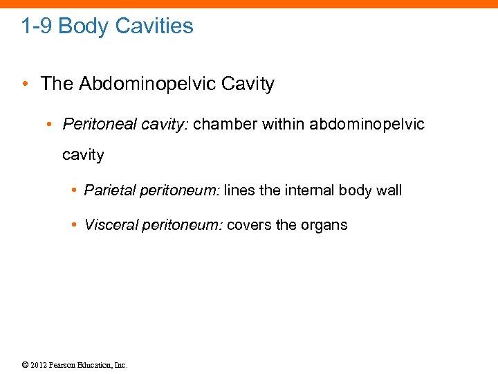 1 -9 Body Cavities • The Abdominopelvic Cavity • Peritoneal cavity: chamber within abdominopelvic