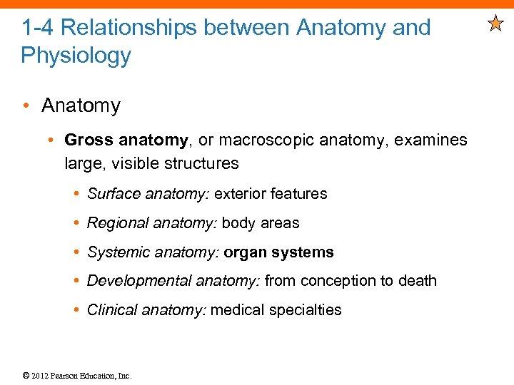 1 -4 Relationships between Anatomy and Physiology • Anatomy • Gross anatomy, or macroscopic