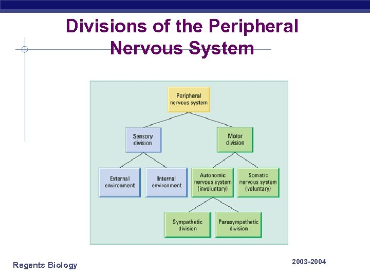 Divisions of the Peripheral Nervous System Regents Biology 2003 -2004