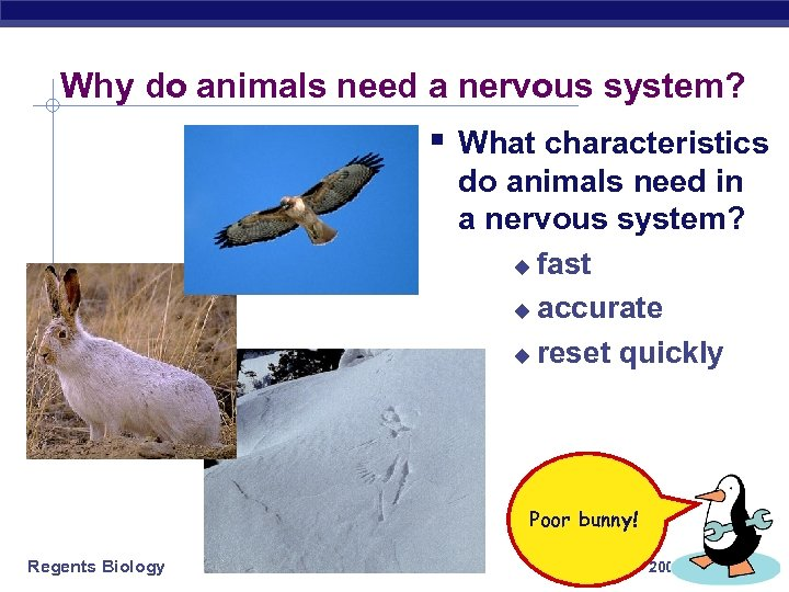 Why do animals need a nervous system? § What characteristics do animals need in