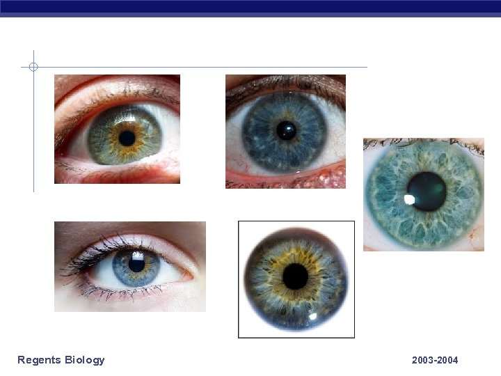 Regents Biology 2003 -2004