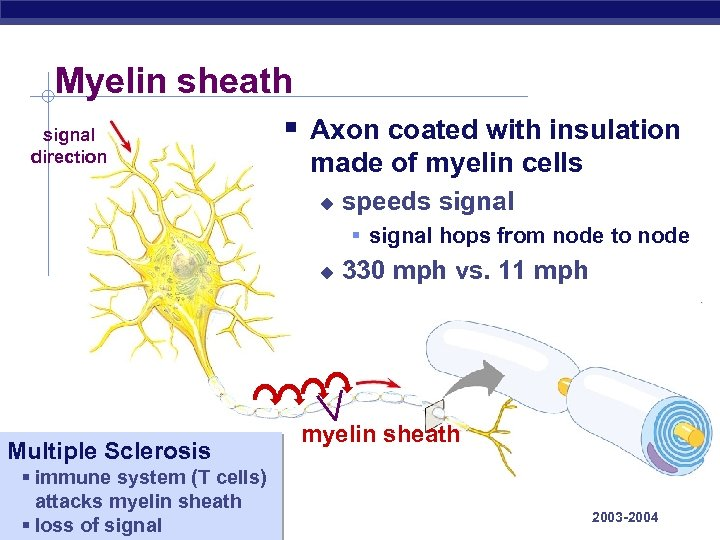 Myelin sheath signal direction § Axon coated with insulation made of myelin cells u