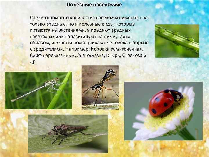 статья вредные и полезные насекомые с картинками квартирах его чаще