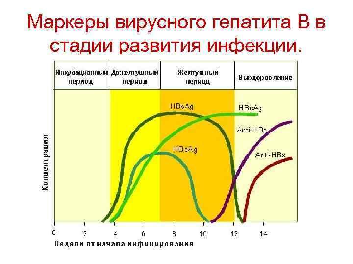 Маркеры вирусного гепатита В в стадии развития инфекции.