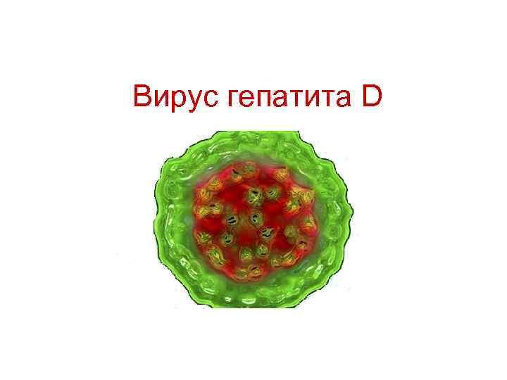 Вирус гепатита D