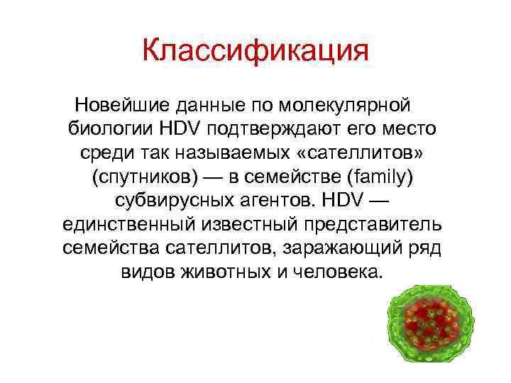 Классификация Новейшие данные по молекулярной биологии HDV подтверждают его место среди так называемых «сателлитов»