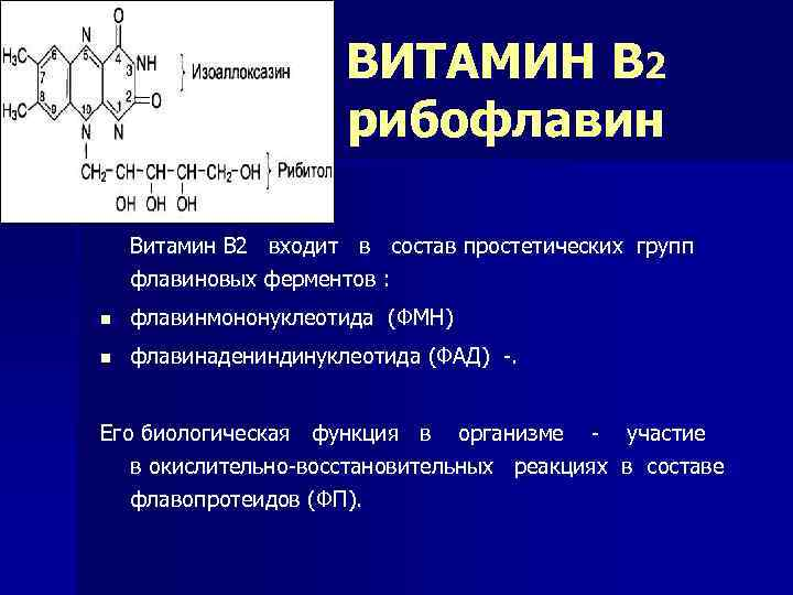 ВИТАМИН В 2 рибофлавин Витамин В 2 входит в состав простетических групп флавиновых ферментов