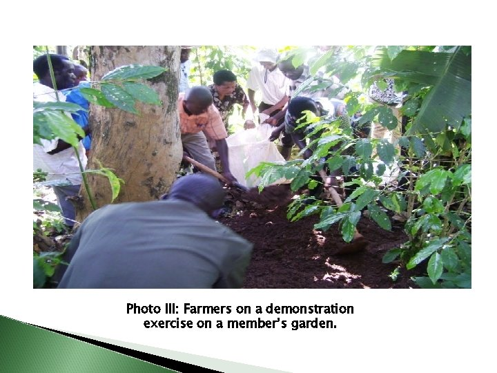 Photo III: Farmers on a demonstration exercise on a member's garden.