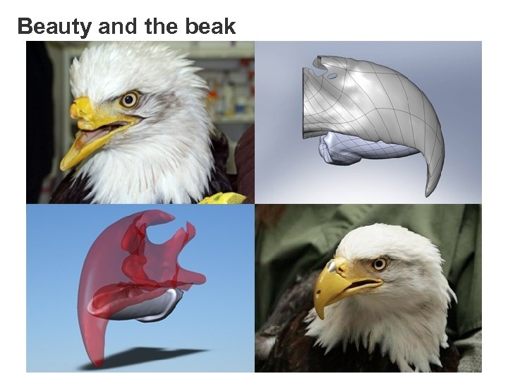 Beauty and the beak