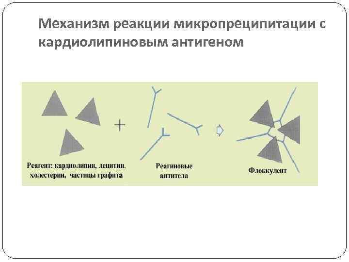 Механизм реакции микропреципитации с кардиолипиновым антигеном