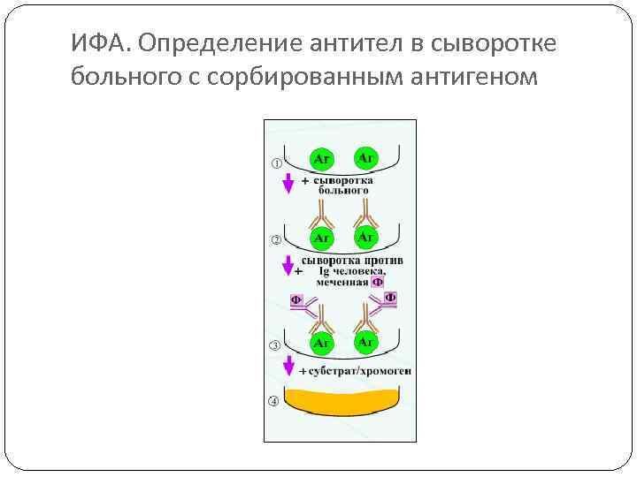 ИФА. Определение антител в сыворотке больного с сорбированным антигеном
